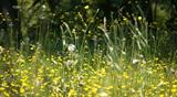 Dealing with hay fever