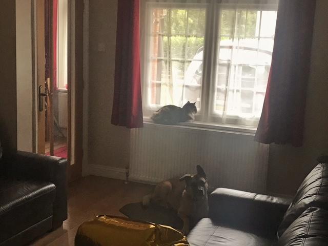 Mojo and Keira