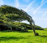 wind tree thumbnail