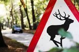 deer hazard sign