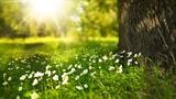 spring-276014_960_720[1] download image