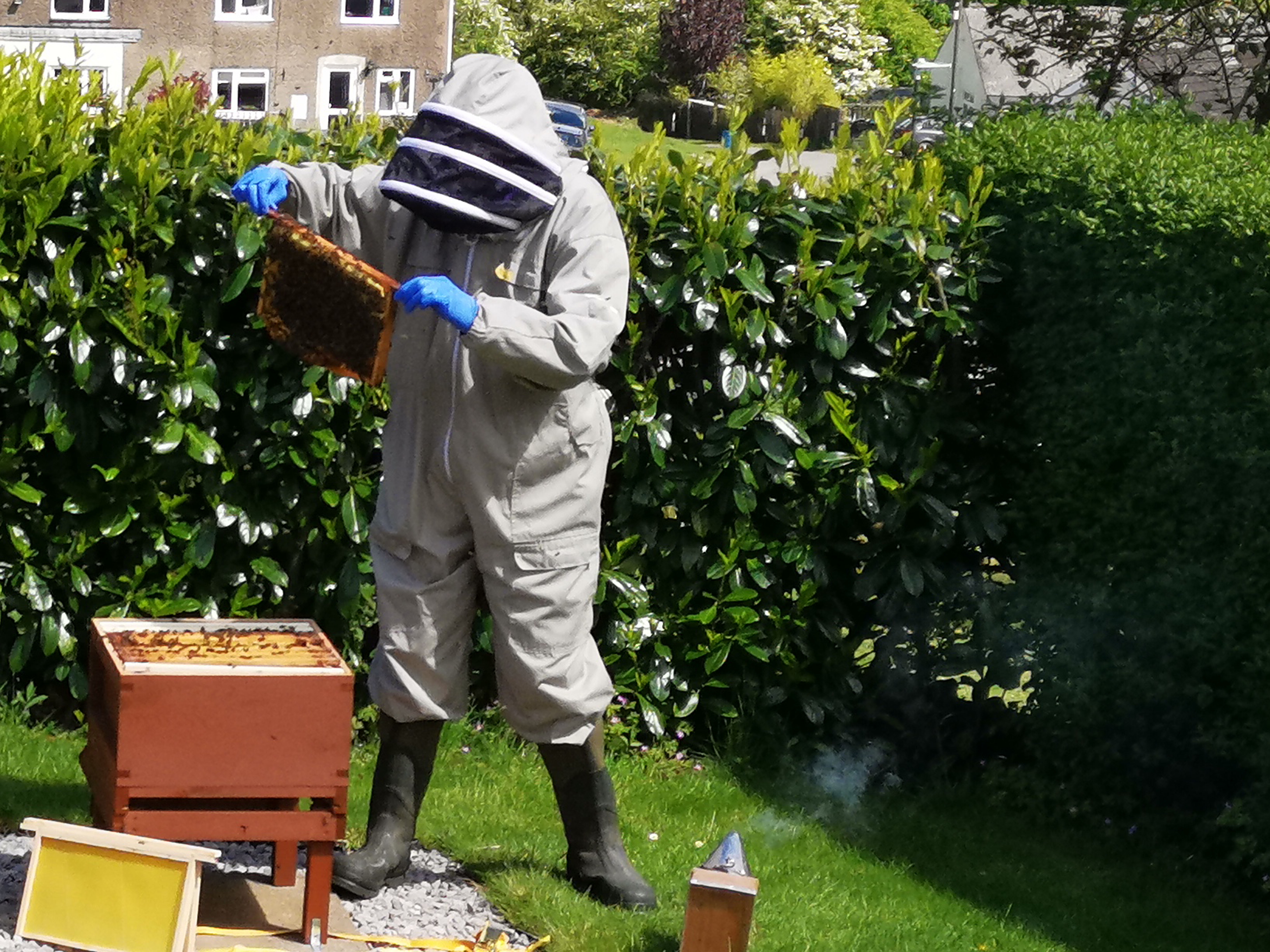 Andrew Cook - Observer and Beekeeper